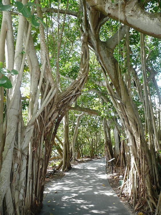 Superbe Selby Botanical Gardens, Sarasota FL.